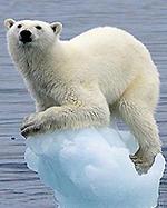 polarbear187
